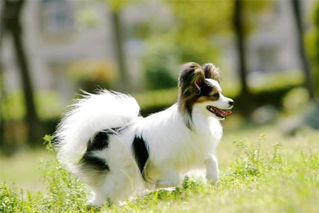 ペットホテルは宝塚市からのアクセスも便利な【PAWS】へ~ストレスのない環境で犬・猫をお預かり~