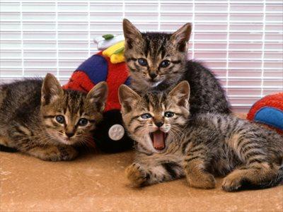 ペットホテルは芦屋市から近い西宮市の【PAWS】~猫専用料金プランをご用意・長期お預かりも可能~