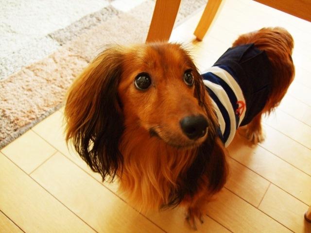 ペットホテルはこんなときに便利!~犬・猫を安全な環境でお預かりします~